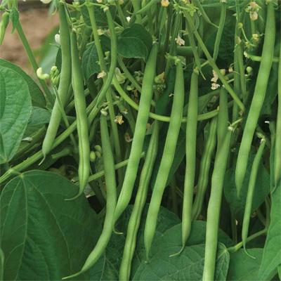 Beans Kiwi