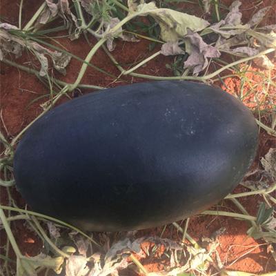 Hybrid Watermelon Nusrat